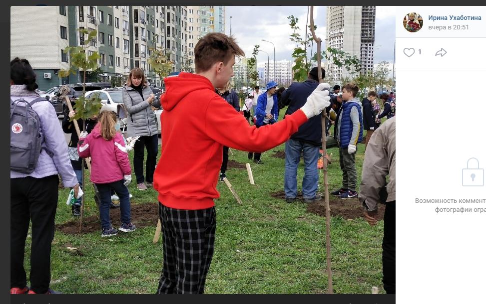 На экофестивале в Некрасовке посадили 40 кленов и 250 кустов