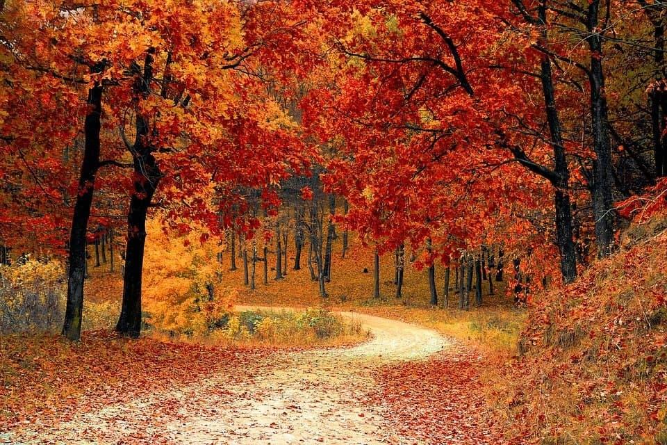 В ТЦСО «Жулебино» провели занятие «Творческая осень»